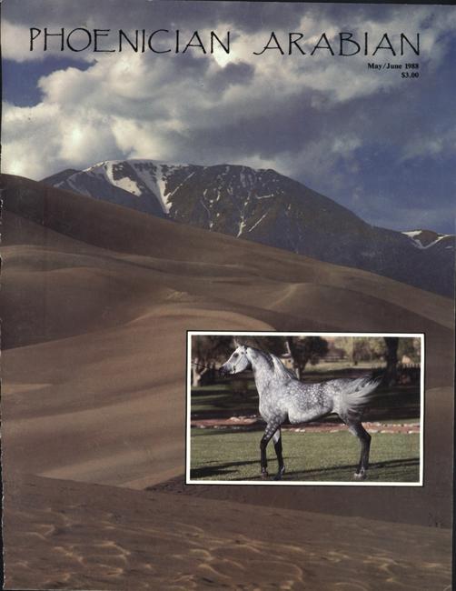Phoenician Arabian Magazine Cover Bo Insogna