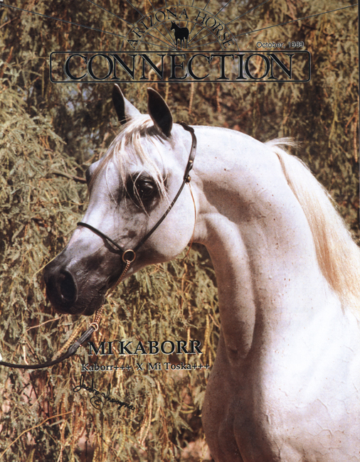 Arizona Horse Connection