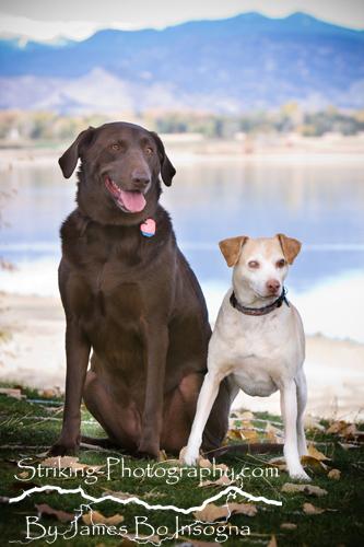 Pet Photography Photographer Longmont Boulder